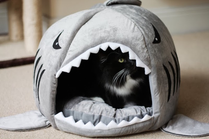 niche pour chat igloo style cabane originale requin