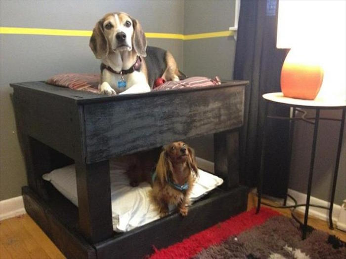 paniere chien paniers chiens double niche étage diy