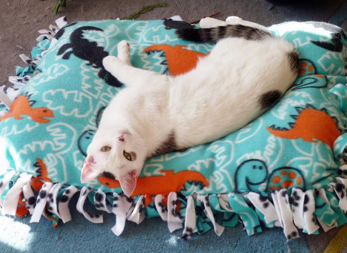 coussin sol couffin pour chat diy confortable pour lit chats