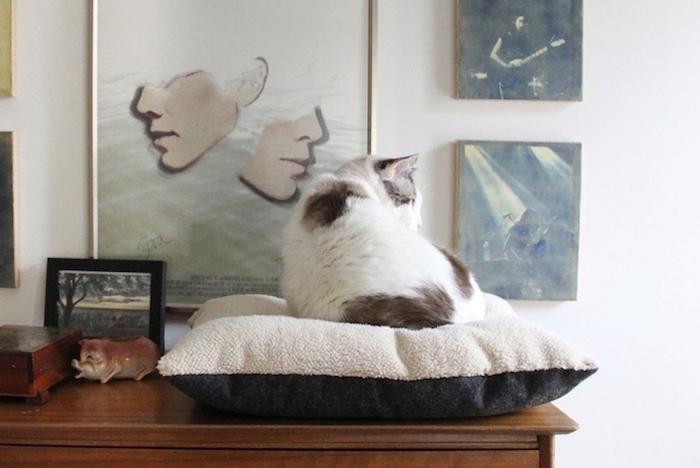 faire coussin pour chat diy facile idée bricolage animaux