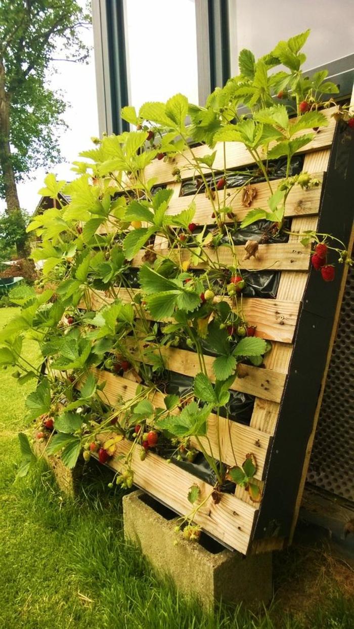 mur végétal, fraises plantées en palette, jardin hors sol avec plantations fruitières