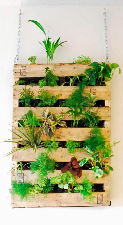 mur végétal en palette, palette suspendue à un mur blanc plantée de plantes décoratives