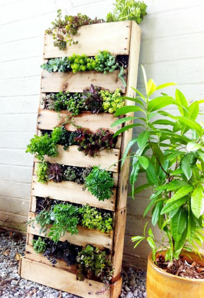 mur végétal palette, plantes grasses arrangées sur un écran de palette et mur blanc