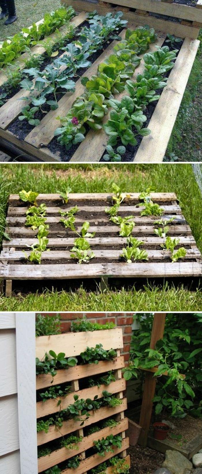 mur végétal palette, palette remplie de terreau avec des plantes semées