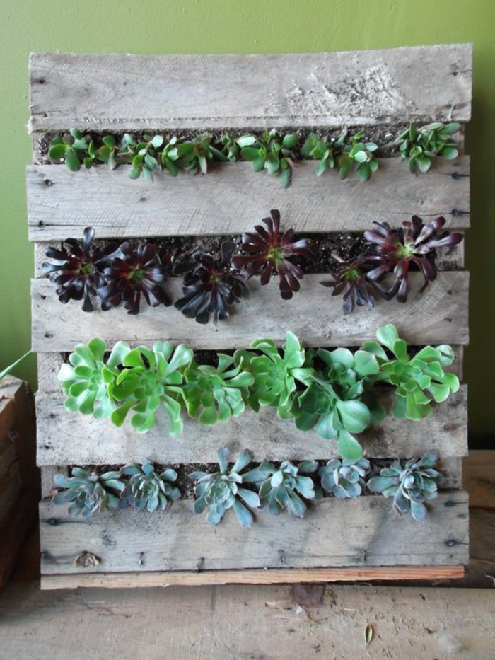 mur végétal palette, quatre étages de succulentes fixés sur une palette