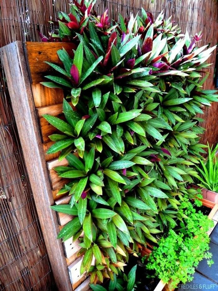 mur vegetal, jardinière verticale de palette avec des plantes exotiques