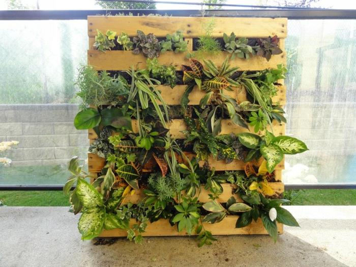 mur vegetal en palette, plantes grasses cultivées sur une palette sciée en deux