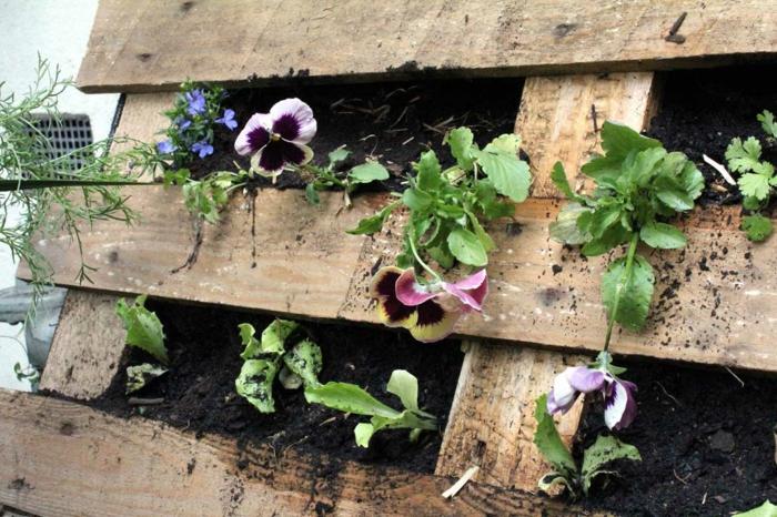 mur vegetal en palette, cultiver des violettes sur une palette avec membrane géotextile