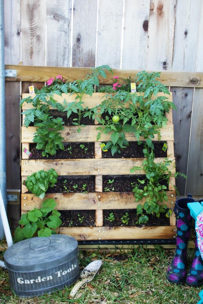 mur vegetal en palette, cultivation de tomates sur une palette mise dans le jardin