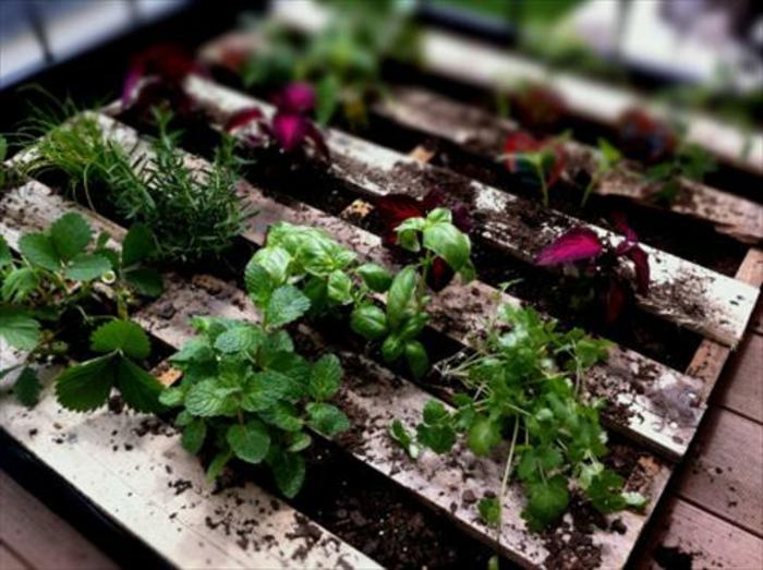 mur végétal en palette, plantes mises dans un terreau sur palette en bois