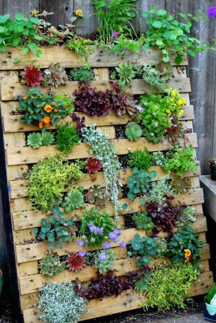 mur vegetal palette, palette de bois dréssée et utilisée pour élever des plantes