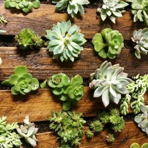 Comment faire un mur végétal en palette - astuces, tutos et plusieurs photos inspirantes