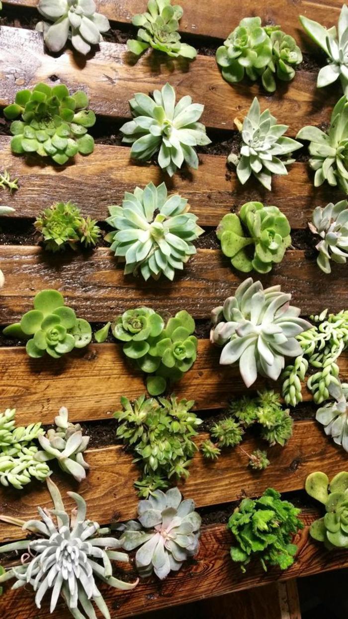 mur vegetal palette, planter des succulentes sur palette verticale
