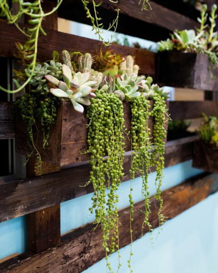 palette plante, succulentes installées sur une palette verticale accrochée au mur