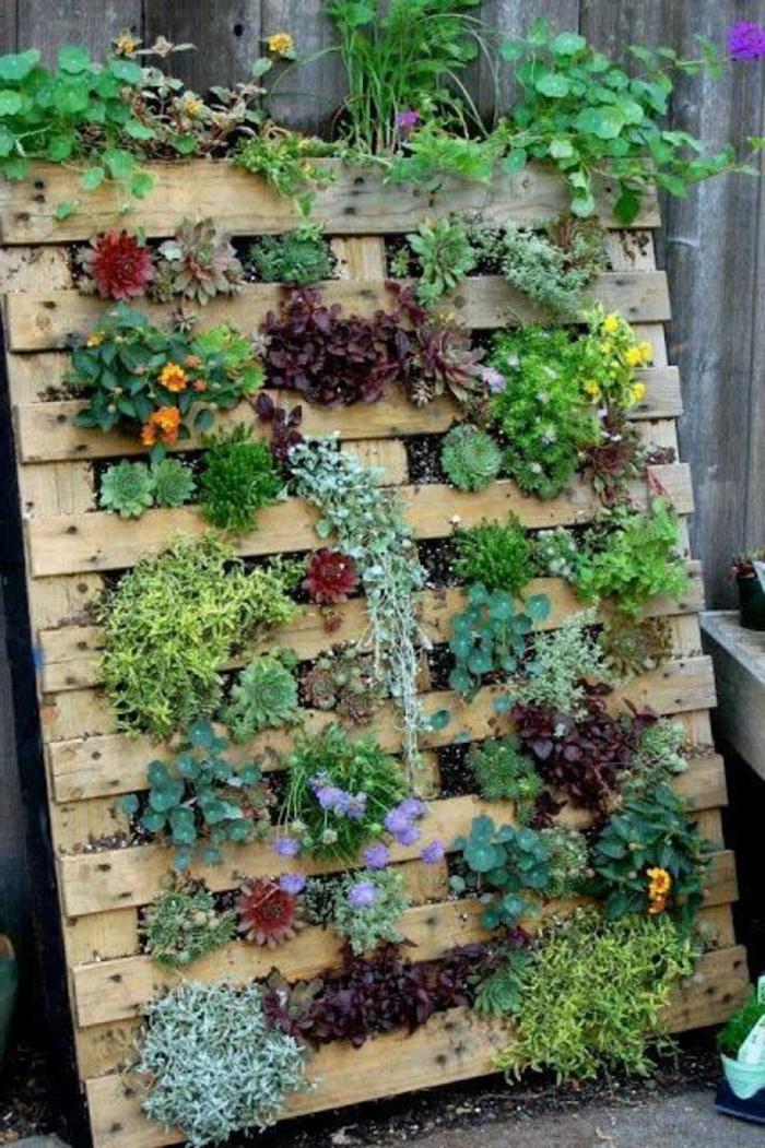 palette plante, plusieurs espèces de plantes grasses plantées à une palette