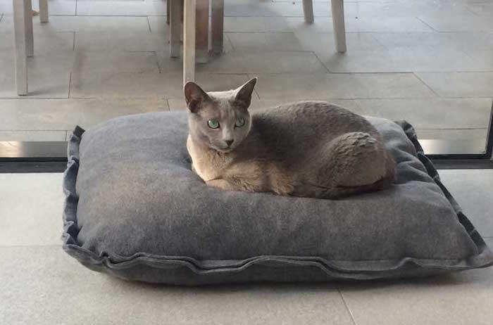 coussin pour chat simple style lit couchage pour chats
