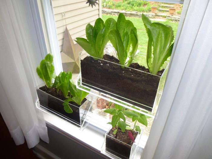 pot pour plante rectangulaire en plastique transparent pour fenetre