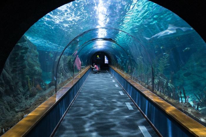 chose a faire quand on s ennuie, visite aquarium, homme avec appareil photo, poisson aquarium