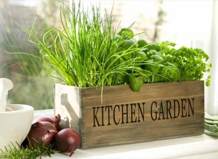 quoi faire quand on s ennuie, brin d herbe, herbes aromatiques, herbes fraiches, herbes aromatiques intérieur, oignons, fenêtre
