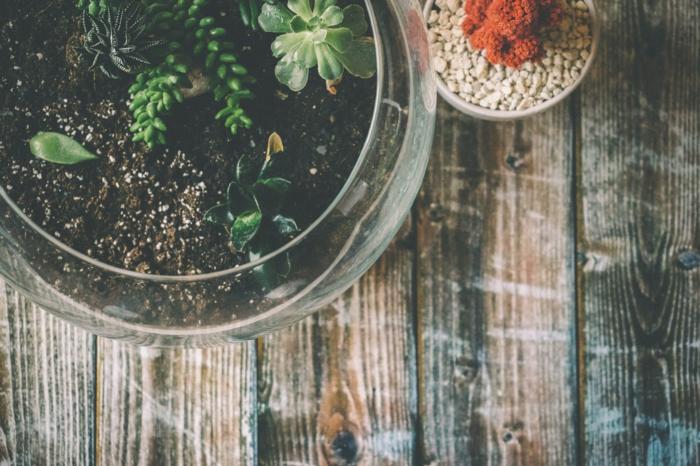 quoi faire quand on s ennuie, fabriquer un terrarium, terrarium plante, table en bois, terrarium suspendu, récipient en verre