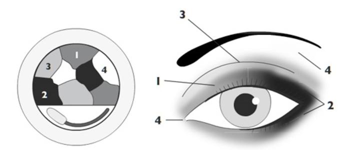 tuto maquillage yeux, illustration comment appliquer les fards à paupières, tuto smoky eyes
