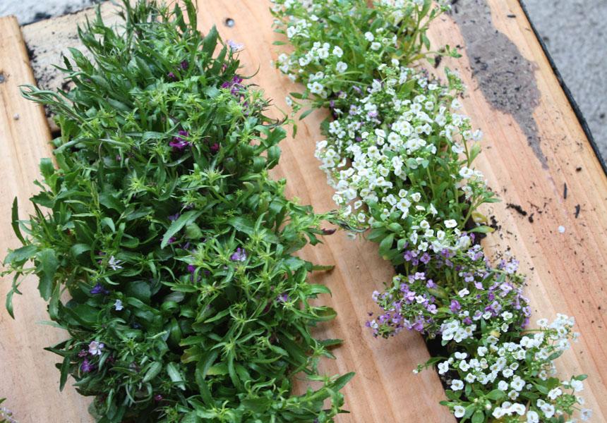 idée jardinage, comment faire une jardiniere en palette exterieure, petites fleurs plantées dans les interstices entre les lattes en bois