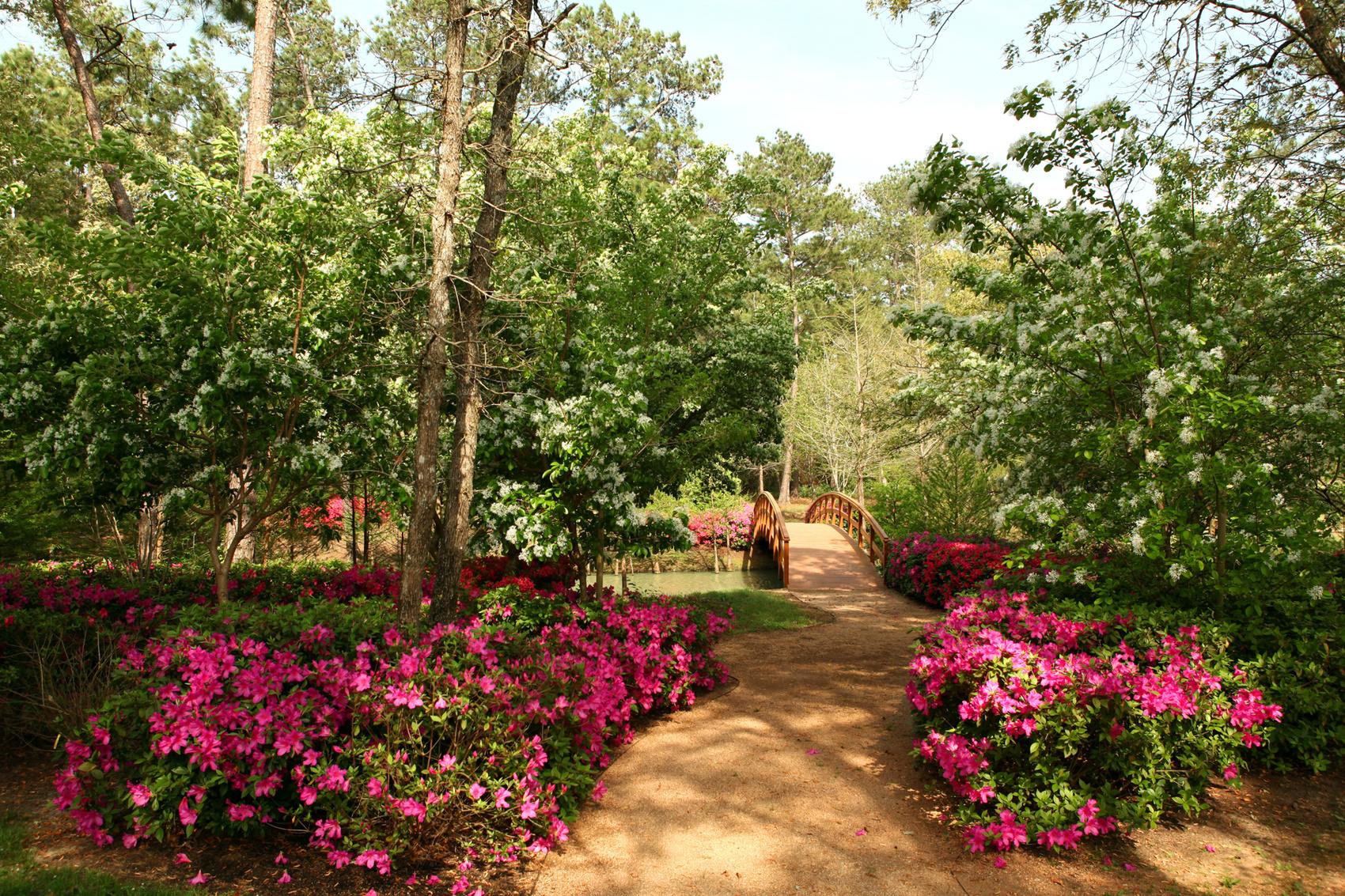 jardin paysager zen japonais, un pot en pierre et bois, plusieurs arbres et fleurs couleur fuschia, paysage été