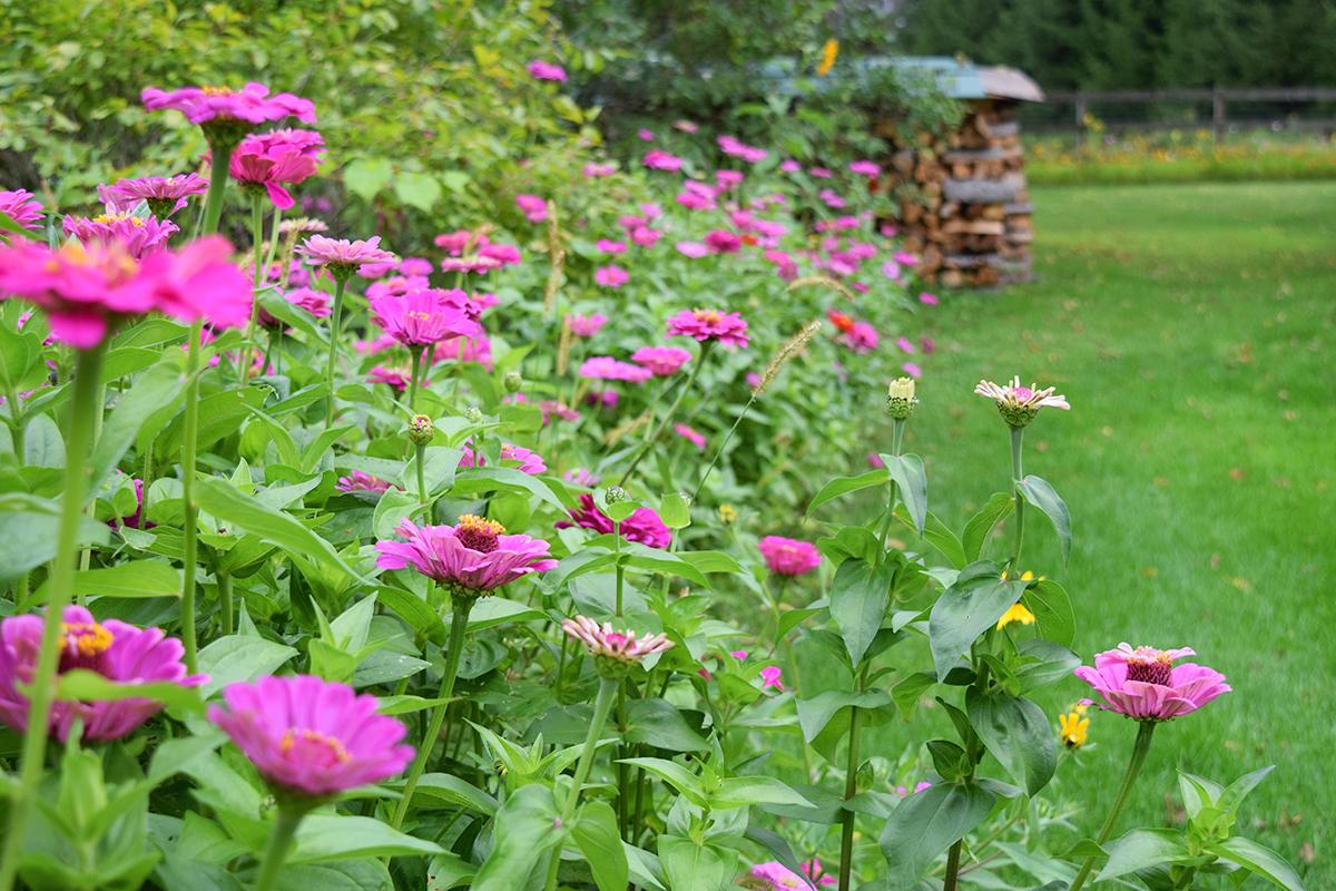 amenagement jardin avec gazon et bordure de fleurs colorés, idée de séparation jardin naturelle