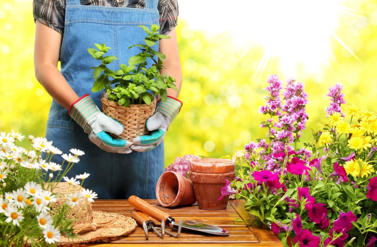 choisir des plantes à planter dans son jardin jolies fleurs pour fleurir son jardin, idee amenagement jardin