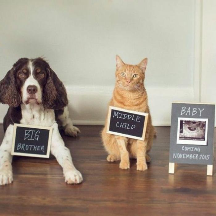 Chat et chien et bébé comment savoir si c est une fille ou un garçon echographie fille annonce image c est une fille