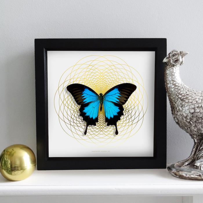 déco appartement, cadre photo noir avec papillon en noir et bleu, objet déco en cuivre, déco salon