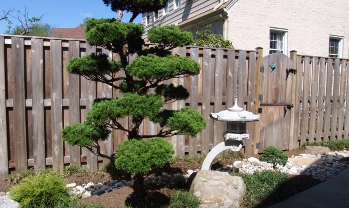 un carré de jardin zen, arbre japonais, lanterne, terreau, pierres galets et arbustes, palissade en bois diy