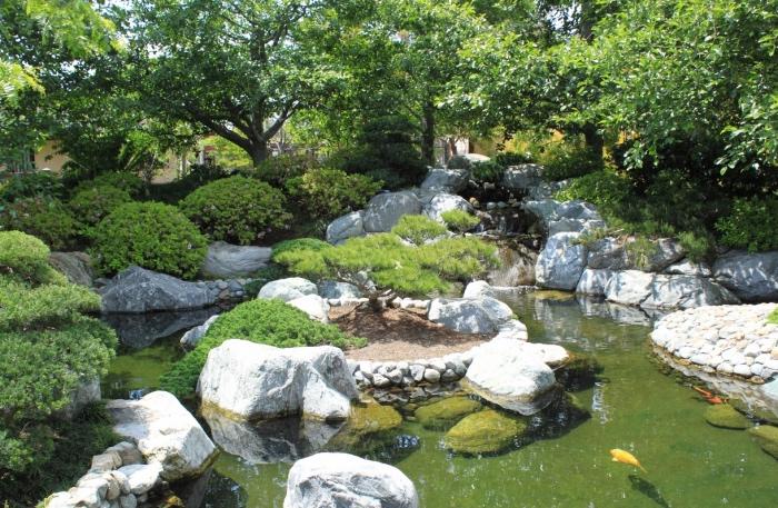 un petit étang, karpe koi, entouré de pierres avec un ilot central, revêtu de sable, pierre et arbre, chute d eau