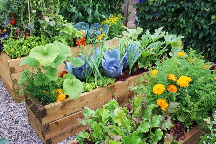idee deco jardin, potager dans une jardinière en bois, bac a fleurs et légumes, idée comment aménager un carré potager