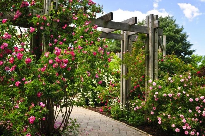 idee jardin deco, un chemin de carreaux en pierre, une tonnelle de jardin avec plusieurs rosiers rose, blancs, rouges