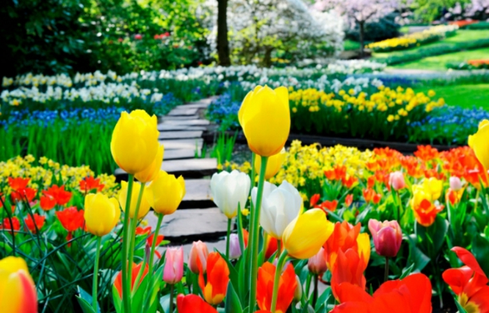 idée de jardin fleuri avec des tulipes et autres fleurs printanières, chemin de pierres, parterres fleuries