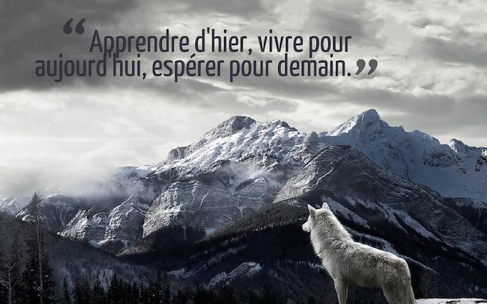phrase sur la vie, fond d'écran avec paysage naturel, montagnes enneigées et loup blanc, image bureau avec citation