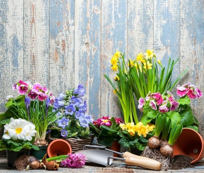 aménager son jardin, plantes, fleurs et outils de jardin près d une palissade, différentes sortes de plantes printanières