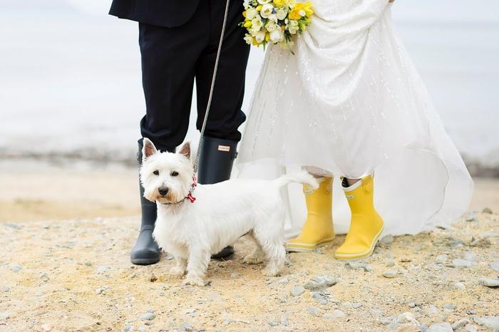 une photo originale de couple de mariés et leur chien, photo prise d'un point de vue étonnant