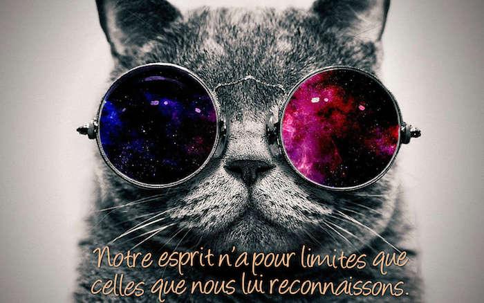 proverbes et citations, photo amusante avec animal, chat aux lunettes cosmos, image avec phrase inspirante