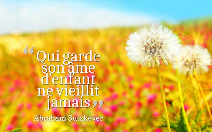 citation sur la vie, photo de la nature, champs jaune avec fleurs rouges, image pissenlits