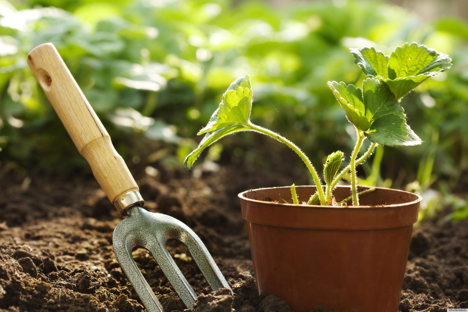 idee deco jardin, préparer la terre, planter des plantes vertes, un étape nécessaire pour créer un joli jardin