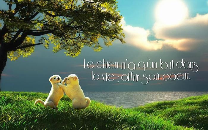 phrase d amour courte, photo collage de la nature avec petits chiens blancs, ciel aux nuages jaunes et rayons du soleil