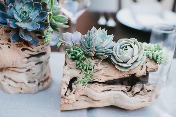 buche bois flotté avec des succulents, idée déco avec de la récup, suggestion decoration exterieure