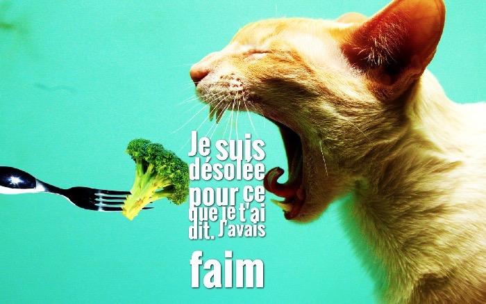 photo drole, image chat qui mange avec citation amusante sur le faim, la blague du jour en fond d'écran vert