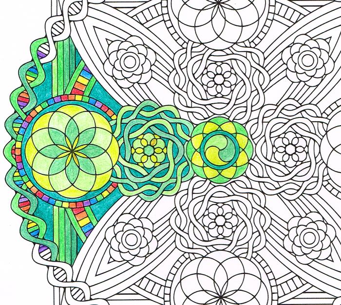 un joli dessin mandala à imprimer et à colorer à motifs floraux qui évoque un vitrail
