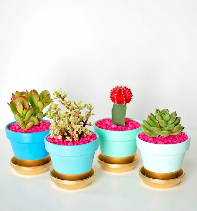 des pots de fleur repeint en bleu et couleur dorée pour planter des succulents, idee creation deco simple