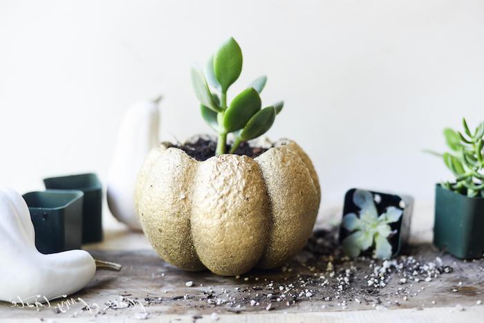 un pot de fleurs fabriqué dans un citrouille vidée qui accueille un succulents, citrouille repeinte éclat doré, deco automne a faire soi meme
