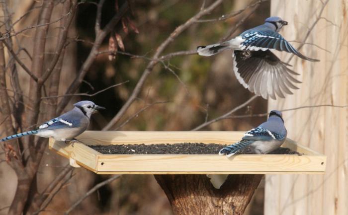plan mangeoire oiseaux gratuit, petite crèche pour les oiseaux, graines tourne-sol