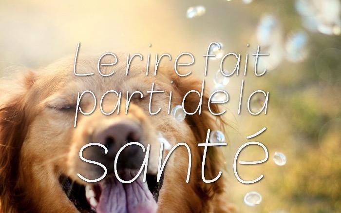 image drole, chien qui s'amuse en plein air, citation amusante sur photo d'animal mignon